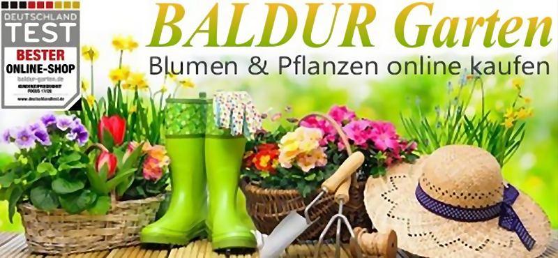 Baldur Garten Gutschein 20 Prozent / Maximal 40 Euro | Gutschein gilt für das gesamte Pflanzensortimen